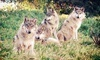 California Wolf Center Coupons Julian, California Deals
