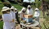 Walk Through a Honeybee Hive with a Local Beekeeping Expert Coupons National City, California Deals