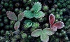Leucadia Succulents Coupons Encinitas, California Deals