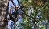 Action Tree Rope Climbing Coupons Big Bear Lake, California Deals