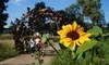 UC Davis Arboretum and Public Garden Coupons Davis, California Deals
