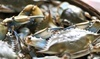 Baltimore Seafood Festival Coupons Baltimore, Maryland Deals