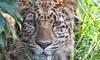 Great Cats World Park Coupons Cave Junction, Oregon Deals