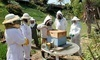 Honeybee Hive Tour with a Local Beekeeping Expert Coupons