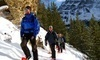 Discover Banff Tours Coupons