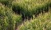 Calgary Corn Maze & Fun Farm Coupons