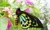 Newport Butterfly Farm Coupons
