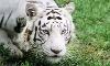 Garold Wayne Interactive Zoo Coupons