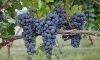 All-Day Lehigh Valley Winery Tour Coupons