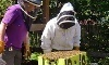 Beekeeping Class Coupons