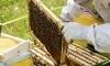 Lark Bee Company Coupons
