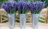 Red Rock Lavender Festival Coupons
