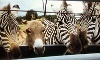 Why Not an American Ark Equestrian Park and Two by Two Petting Zoo Coupons