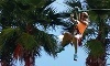 Zoom Air Adventure Park- Daytona Beach  Coupons