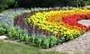 Klehm Arboretum & Botanic Garden Coupons