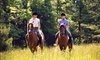 Breezy Meadow Equestrian Centre at Tri-Brook Equestrian Center Coupons