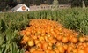 Arata Pumpkin Farm Coupons